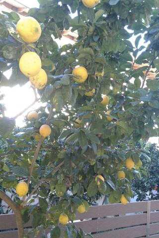 standard room george studios lemon tree